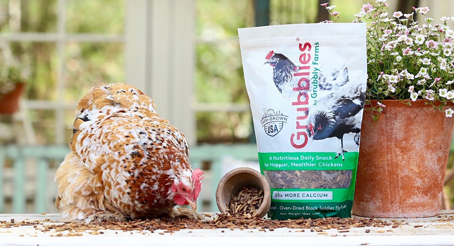 A chicken eating feed next to a packaged retail Grubbly Farms bag of feed.